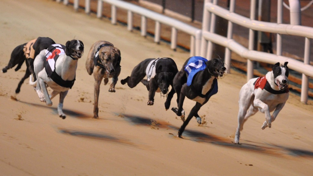 Greyhound Racing Stag Parties